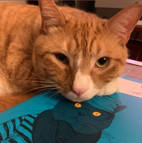 an orange cat with its head resting on a blue book