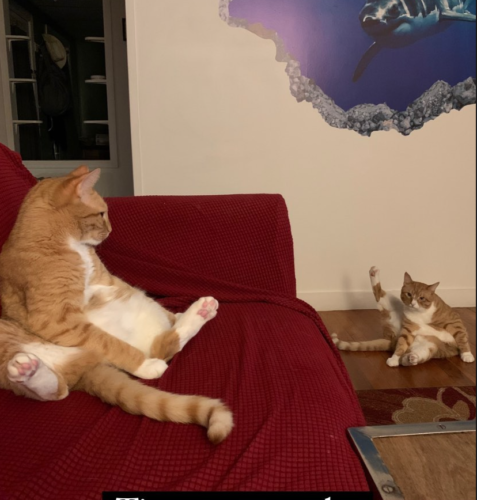 two orange cats stretching