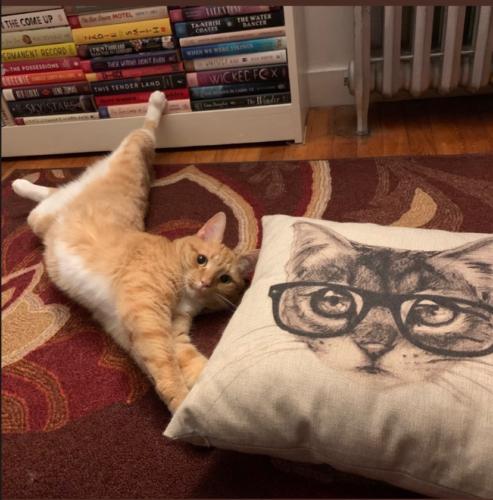 orange cat stretching on the floor