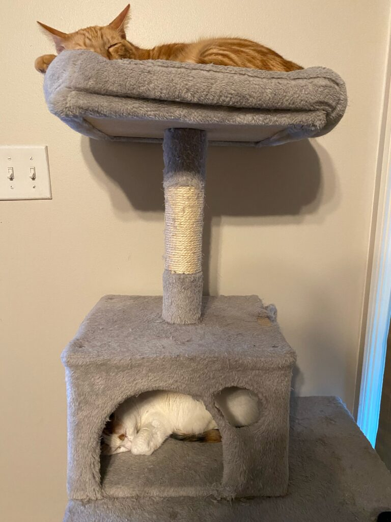 two cats sleeping in a cat tree