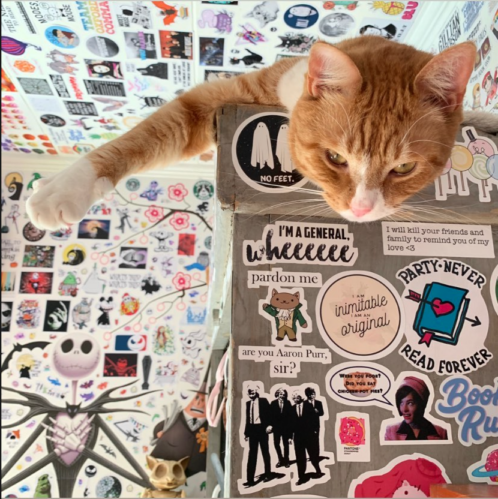an orange cat hanging its head over the side of a gray bookcase covered in stickers, with stickers all over the walls in the background